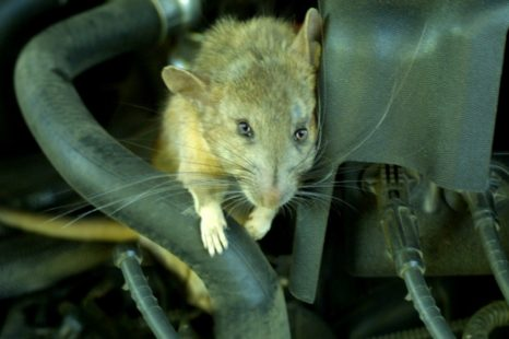 Keeping Mice Out of Your Vehicle
